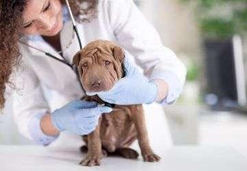 Curso practico auxiliar veterinario