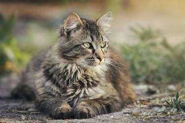 Peluquería y estética animal canina y felina