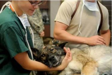 Auxiliar de veterinaria