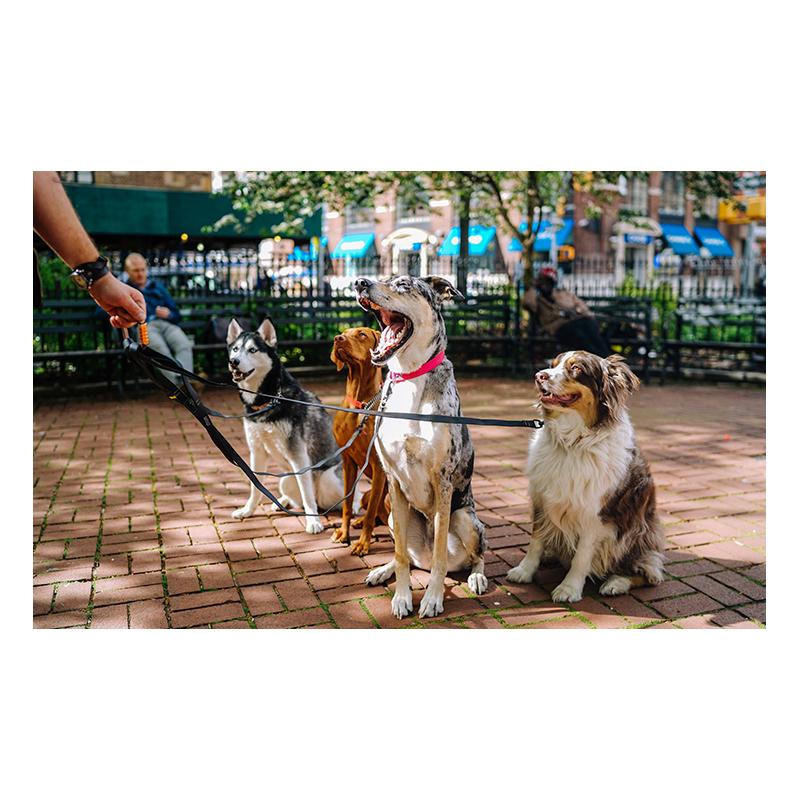 curso acreditado adiestramiento animales