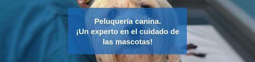 curso en peluquería canina