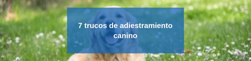 7 trucos de adiestramiento canino