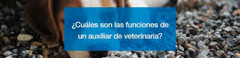 curso acreditado de auxiliar de veterinaria