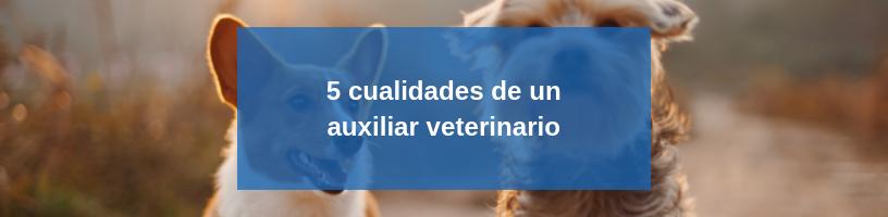 5 cualidades de un auxiliar veterinario