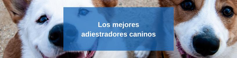 Los mejores adiestradores caninos