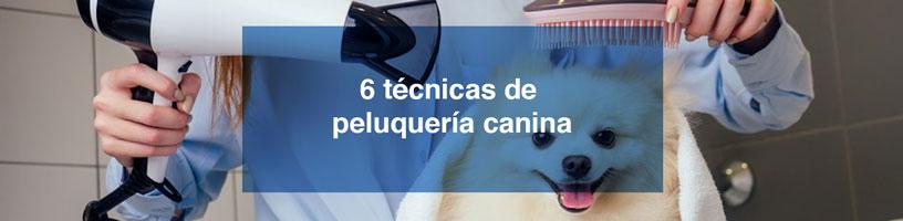 6 técnicas de peluquería canina